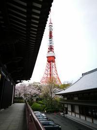 江戸の桜 増上寺2 @東京都 - 963-7837