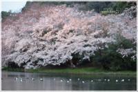 SANKEIEN / 三渓園Ⅵ - 花鳥風猫ワン