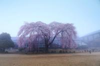 南信州プラスαの桜旅 - TAKAの旅と写真