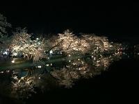 須坂市臥竜公園の桜   昼と夜 - テクテク信州