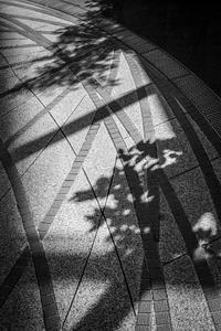 2017年4月20日 銀河広場の光蜥蜴 - Silver Oblivion