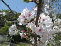 松山市中島の春まつり レポート - 愛媛県職員ブログ
