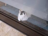 名画のネコは何でも知っている - ネコと文学と猫ブンガク