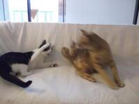 ブランケットキャッツ - ネコと文学と猫ブンガク