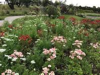前日の雨が嘘のよう・・・翌日は、夏日・・ - 宮崎の花屋 アナーセン