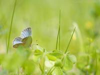 春は匍匐 - M2_pictlog