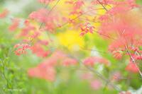 原谷苑のお花達〜落葉低木〜 - *PHOTOMOMIN*