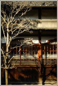 谷根千 -85 - Camellia-shige Gallery 2