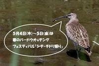 ★5月4~5日は春のバードウォッチング・フェスティバル「シギ・チドリ祭り」 - 葛西臨海公園・鳥類園Ⅱ