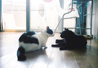 黒いおしと - sky blue drop~14ニャンズトネコハウス//