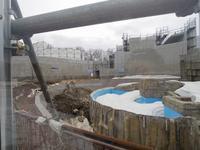 ホッキョクグマの飼育、円山動物園の新施設 - 黄金絹毛鼠(コガネキヌゲネズミ)