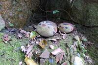 猫の町 尾道 猫の細道で遭難一歩手前 - 猫空くみょん食う寝る遊ぶ Part2