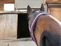 269鞍目 7歩 - 美味しい時間と馬と犬