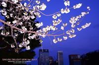 桜Ver.2017 トワイライト竹橋 [SAKURA TWILIGHT] - WEEKEND Life Style shirocha0051