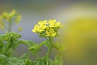透明な春 - フォトン