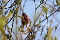 3月に出会った鳥さんたち@いろいろ - Buono Buono!