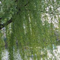 スズメ撮影で垣間見た、ある日の東京。 - カフェのテントの下で~cafe chez nousの12ヵ月~