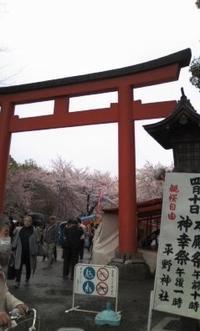 平野神社:北野白梅町駅 - お休みの日は~お散歩行こう