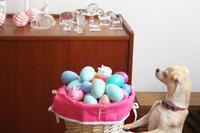 Easter 2017 egg hunt - ビスケットの缶