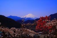 29年4月の富士(20) 大月の桜と富士  - 富士への散歩道 ~撮影記~