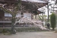 上野寛永寺根本中堂 - 写真日記