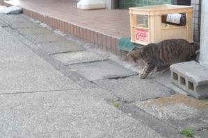 三崎港ー街並み散策ー - 僕の足跡