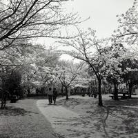 性懲りもなく #05 - Yoshi-A の写真の楽しみ
