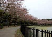 「染井吉野」が終わった公園では・・・ - 【出逢いの花々】