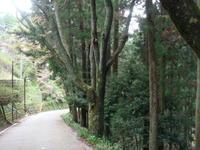 吉野の桜 - 京都で不動産・中古マンションを探すなら「京都マンション・戸建ナビ」