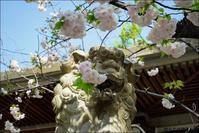 下町散歩:亀戸香取神社と亀戸天神 - Photocards with love