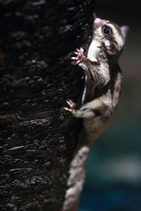 4月20日(木) 忍耐 - ほのぼの動物写真日記