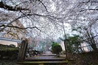 桜便り2017 京北町の桜巡り@旧宇津小学校の桜 - デジタルな鍛冶屋の写真歩記