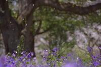 春の風♪ - 今日もカメラを手に・・・♪
