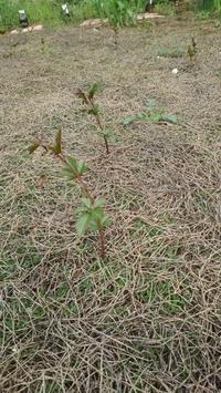 オレンジ色の根っこ - うちの庭の備忘録 green's garden