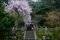 大豊神社 - Deep Season
