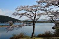 富士の四季 春 - フォト・フレーム  - 四季折々 -