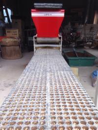 種籾の播種 もち&黒米 - にじまる食堂 & にじまる農園