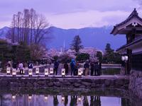 藍色桜 - カメラのまばたき