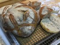 ホシノ天然酵母 パン種 ブースにて - 種と仕掛け de パン作り      heizelpanヘイゼルパン bread & beyond