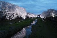 野川の夜桜2017 - *ちょっとコーヒーでも*