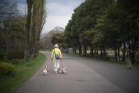 犬の散歩♪ - 光の贈りもの