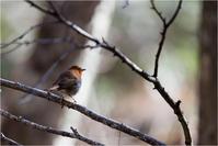 八ヶ岳の野鳥 - Brightness of the moment