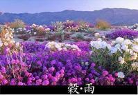 ♪夏も近づく八十八夜、野にも山にも若葉が茂る「穀雨」 - 春夏秋冬、めくるめく四季