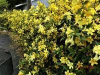 黄色に染まるー - 私の息抜き(^o^)
