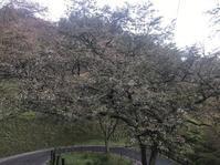 吉野山 桜の進捗状況(4月20日現在)と、吉野の雲海 - 吉野山 吉野荘湯川屋 あたたかみのある宿 館主が語る