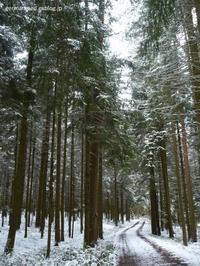 4月下旬の雪景色 - 黒い森の白いくまさん