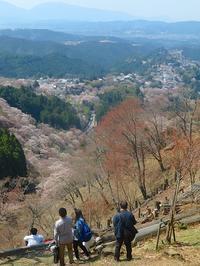 続・吉野桜の「一目千本」・・・その一 - 続・感性の時代屋