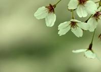 若葉の季節 - 花の仕事と。。日々の暮らし。。