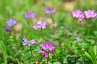 春の花(4月) - つれづれ日記