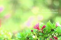 恋の喜び - 色音あそび